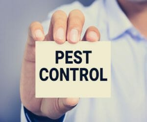 Welcome To Our New Pest Control Blog