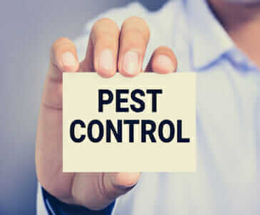 Pest Control Suwanee – Think Green Pest Control