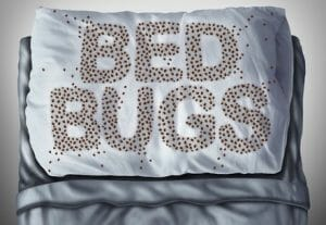 Main Cause of Bed Bugs