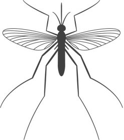 Mosquito Control – Think Green Pest Control